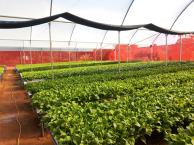 Estufa Agrícola Hidrogood com produção de alface - Perfil R80