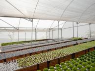 Estufa agrícola Hidrogood com folhosas.