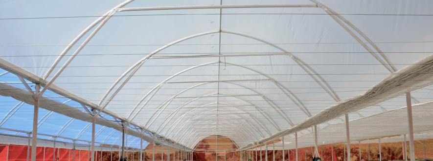 A produção de mudas de hortaliças em ambiente controlado