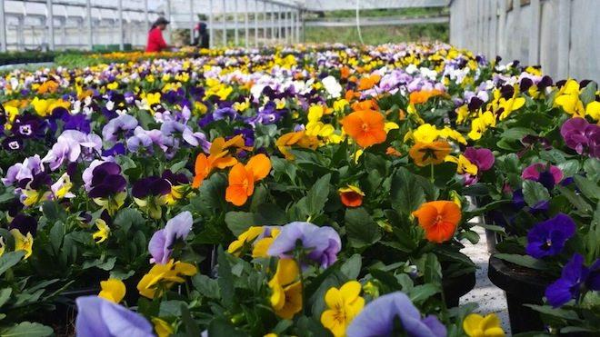 flores hidroponicas