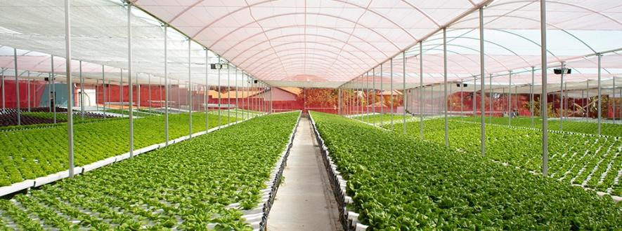 hidrogood news geada e cultivo protegido
