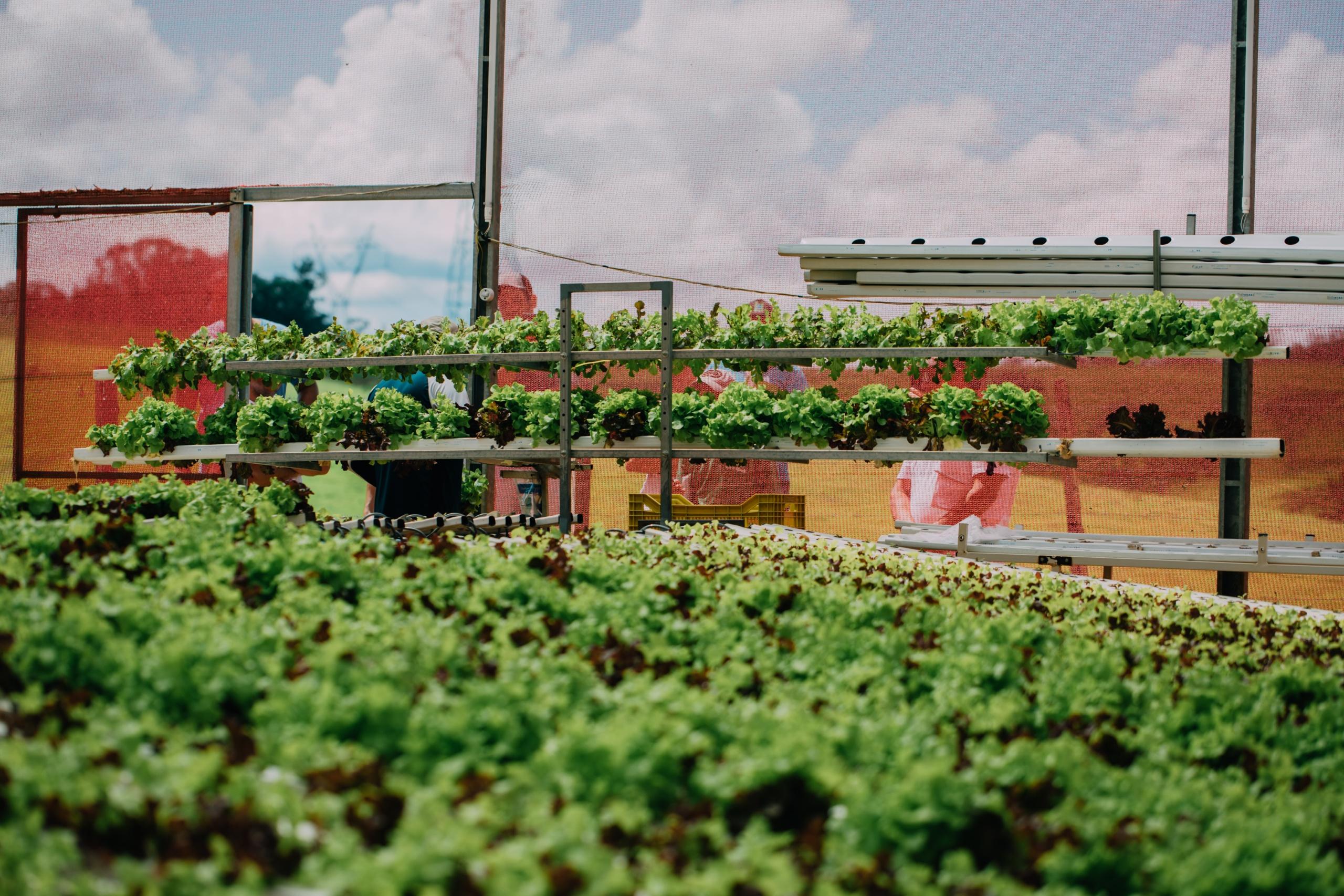 hidrogood planejamento financeiro agronegocio